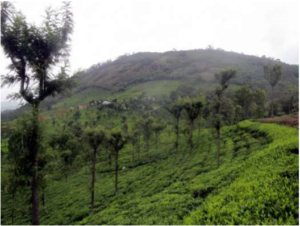 Slopes of the Coonoor Basin