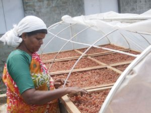 Gooseberry being dried at a value addition centre