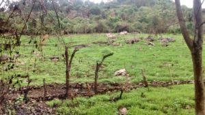 Mixed Farming at Konavakkarai